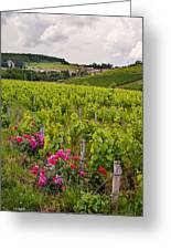 Grapes And Roses Greeting Card by Allen Sheffield