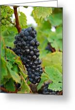 Grapes Greeting Card by Hannes Cmarits