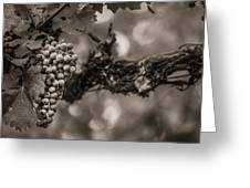 Grapes In Grey 1 Greeting Card by Clint Brewer