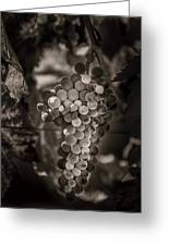 Grapes In Grey 3 Greeting Card by Clint Brewer
