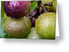 Grapes in the Rain Greeting Card by James Barber