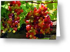 Grapes On The Vine Greeting Card by Tim Gilliland