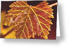 Grapevine In Fall Greeting Card by Artist and Photographer Laura Wrede