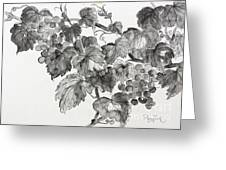 Grapevine In Late Summer Greeting Card by Phong Trinh