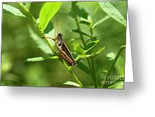 Grasshopper Climb Greeting Card by Neal  Eslinger