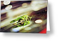 Grasshopper Disco Greeting Card by Gynt