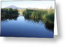 Grassy Reflection Greeting Card by Kami McKeon
