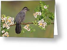 Gray Catbird Calling Greeting Card by Daniel Behm