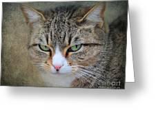 Gray Tabby Cat Greeting Card by Jai Johnson