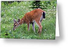 Grazing Young Buck Greeting Card by Mike Dawson