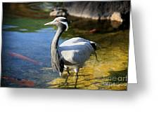 Great Blue Heron Greeting Card by Cheryl Young
