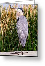 Great Blue Heron Greeting Card by Edward Fielding