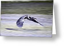 Great Blue Heron In Flight Greeting Card by John Haldane