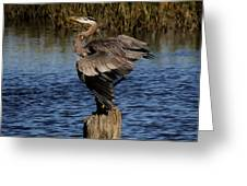 Great Blue Heron In The Marsh - # 17 Greeting Card by Paulette Thomas
