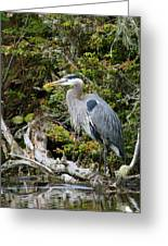 Great Blue Heron On Log Greeting Card by Randall Ingalls