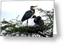 Great Blue Heron With Fledglings II Greeting Card by Suzanne Gaff