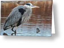 Great Blue Greeting Card by Thomas Pettengill