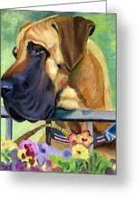 Great Dane On Balcony Greeting Card by Lyn Cook