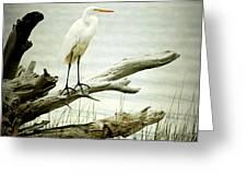Great Egret on a Fallen Tree Greeting Card by Joan McCool