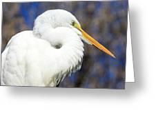 Great Egret Sunning Greeting Card by Dorothy Menera