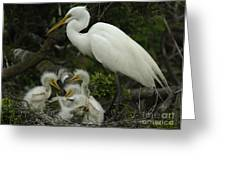 Great Egret With Young Greeting Card by Bob Christopher