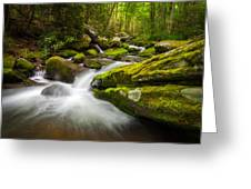 Great Smoky Mountains Gatlinburg Tn Roaring Fork - Gift Of Life Greeting Card by Dave Allen