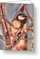 Great Tit  A  Leif Sohlman Greeting Card by Leif Sohlman