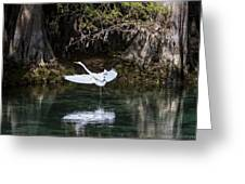 Great White Heron In Flight Greeting Card by Charles Warren