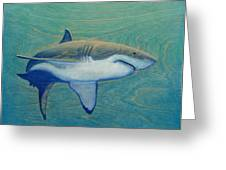 Great White Greeting Card by Nathan Ledyard