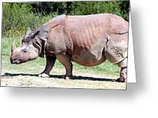 Greater One-horned Asian Rhino Greeting Card by Laurel Talabere