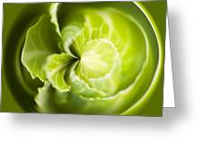 Green Cabbage Orb Greeting Card by Anne Gilbert