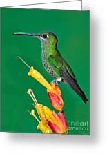 Green-crowned Brilliant Greeting Card by Anthony Mercieca