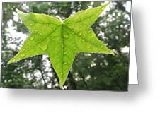 Green droplets Greeting Card by Sonali Gangane