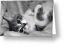 Green Eyed Kitten Greeting Card by Teresa Zieba