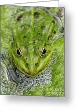 Green Frog Greeting Card by Matthias Hauser