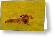 Green Grass And Floppy Ears Greeting Card by Jeff  Swan