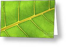 Green Leaf Close Up Greeting Card by Elena Elisseeva