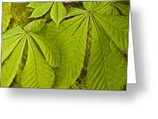 Green Leaves Series Greeting Card by Heiko Koehrer-Wagner