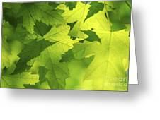 Green Maple Leaves Greeting Card by Elena Elisseeva