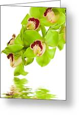 Green Orchid Greeting Card by Boon Mee