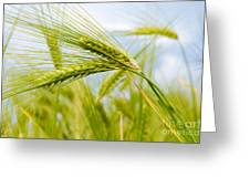 Green Rye Art Greeting Card by Boon Mee