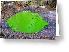 Green spill Greeting Card by David Lee Thompson