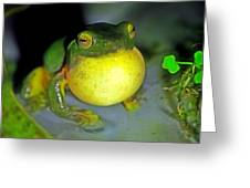 Green Tree Frog Croaking Greeting Card by Lanjee Chee