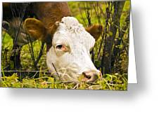 Greener On The Other Side Of The Fence Greeting Card by David Simons