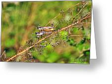 Gregarious Grasshoppers Greeting Card by Al Powell Photography USA