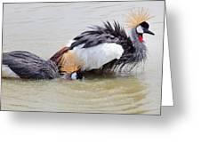 Grey Crowned Crane Washing In Natural Water Pool Greeting Card by Suriya  Silsaksom