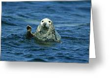 Grey Seal Waving Greeting Card by Martin Woike