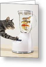 Grey Tabby Cat With Paw On Blender Greeting Card by Thomas Kitchin & Victoria Hurst