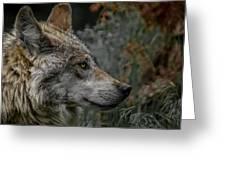 Grey Wolf Profile 3 Greeting Card by Ernie Echols
