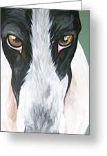 Greyhound Eyes Greeting Card by Leslie Manley